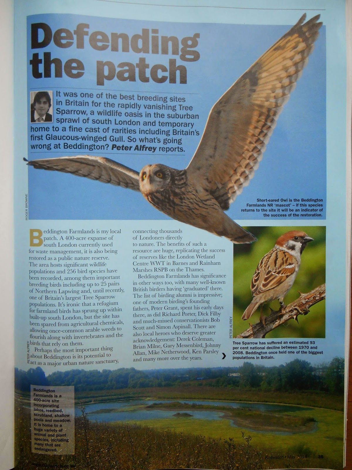 peter alfrey in birdwatching magazine